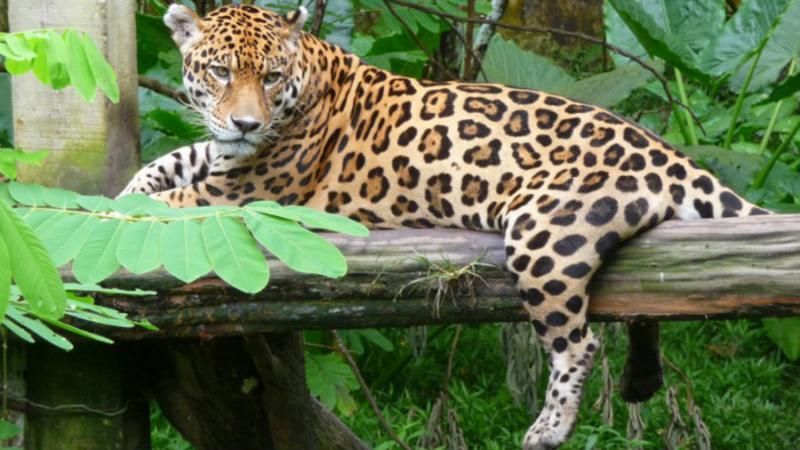 Resultado de imagen para Congreso de Áreas Protegidas de Latinoamérica y el Caribe